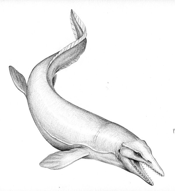 Illustration of mosasaur