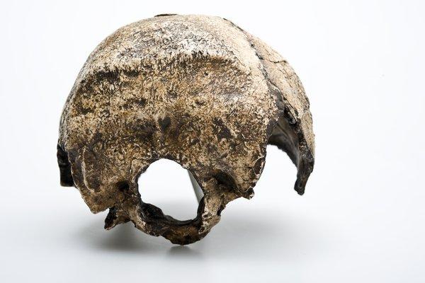 Swanscombe skull - Homo heidelbergensis back view