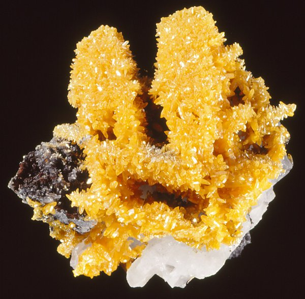 Mimetite fine yellow crystals