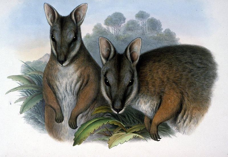 Mammals of Australia