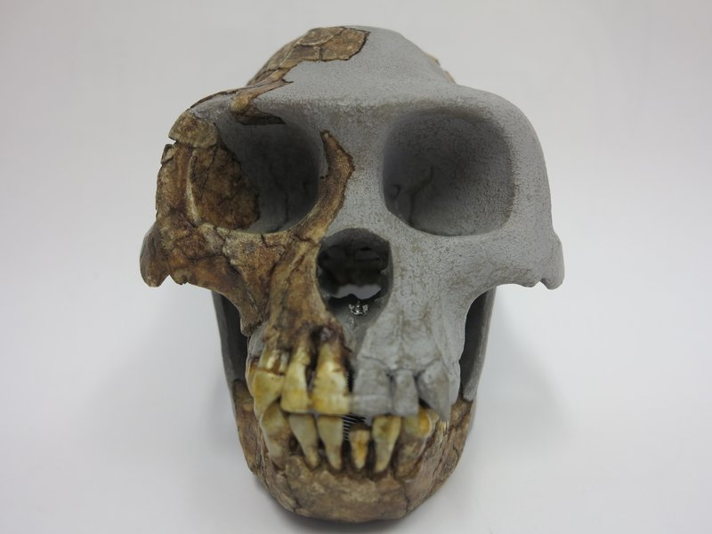 carbon dating human fossils