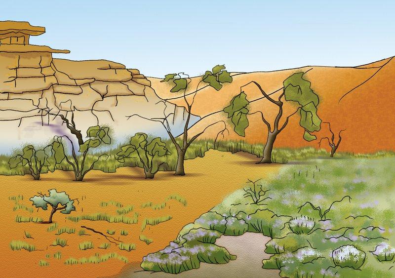 Arid Habitat