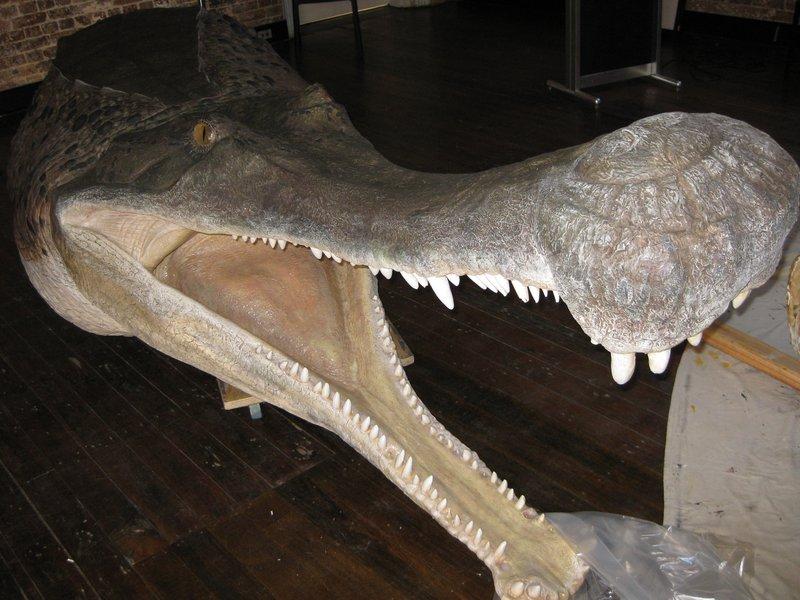 Super Croc head