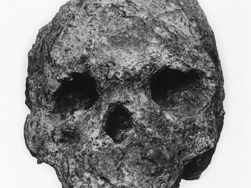 Talgai skull 1 - Anterior