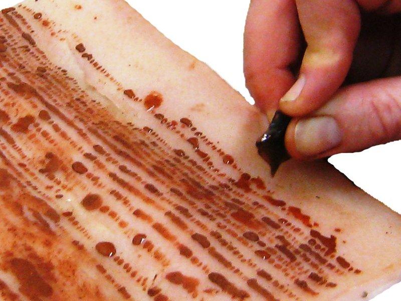 Tattooing Pig Skin