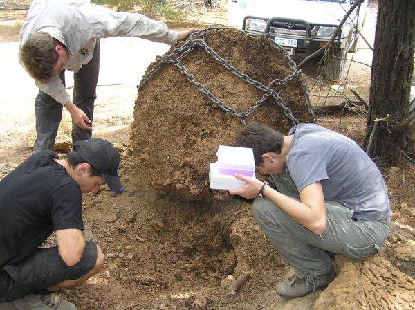 Termite nest 2
