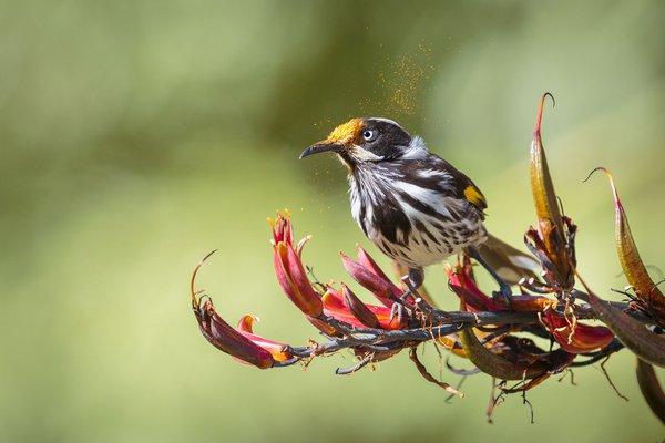 Bird pollinating