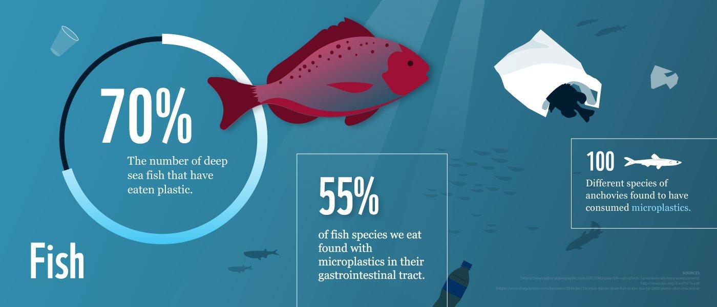 70% of deep sea fish have eaten plastic