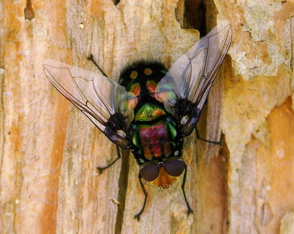 Who Said Flies Aren't Cool? - Nick Monaghan, Open Category 2006