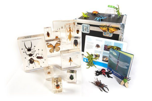 Minibeast Museum in a Box