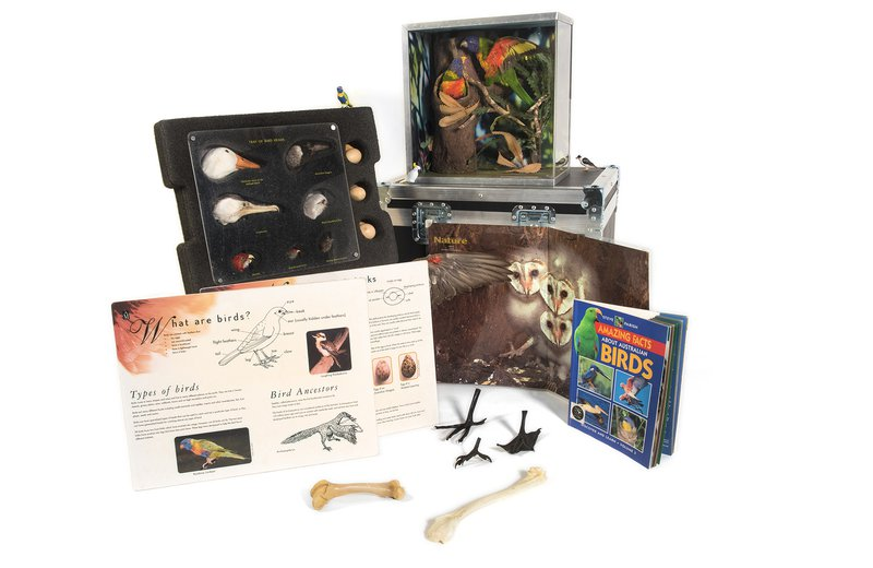 Birds Museum in a Box