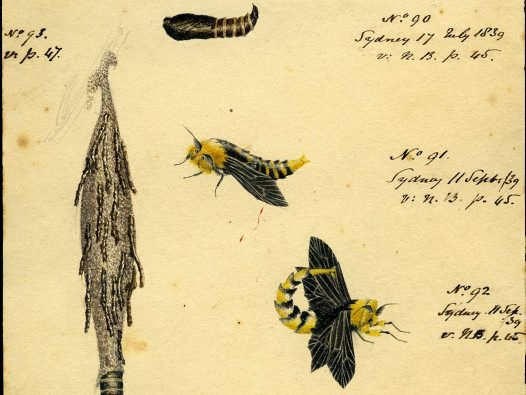 Sketches by Mary Scott and Fanny Stirling, 1839