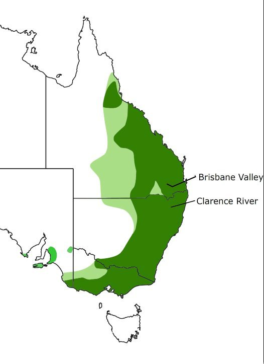 Koala distribution