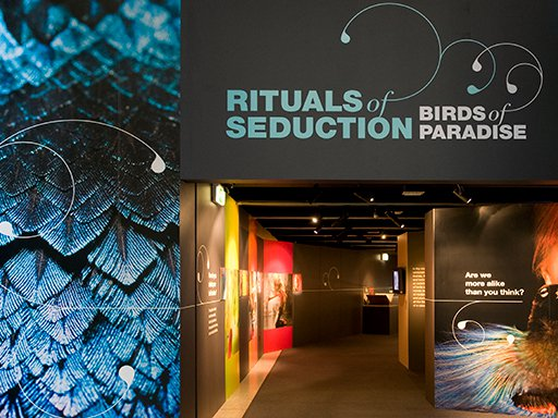 Exhibition entrance, Rituals of Seduction: Birds of Paradise