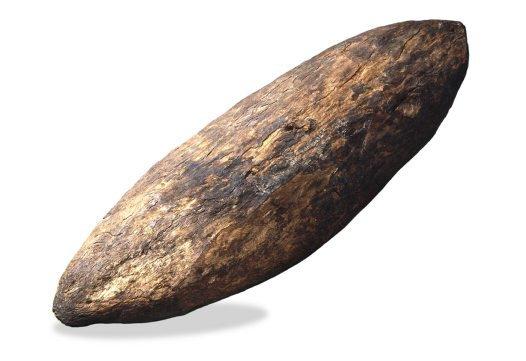 Face of shield collected at Botany Bay-Kamay in 1770.