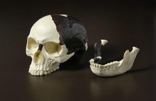 Reconstruction of the Piltdown skull