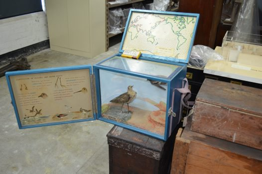 The first Museum travelling case, 'Sea Birds'