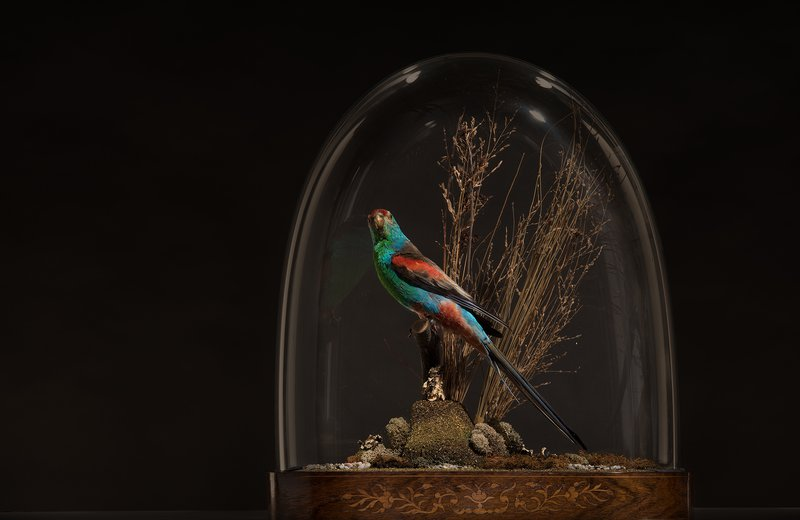 Bird specimen under glass display