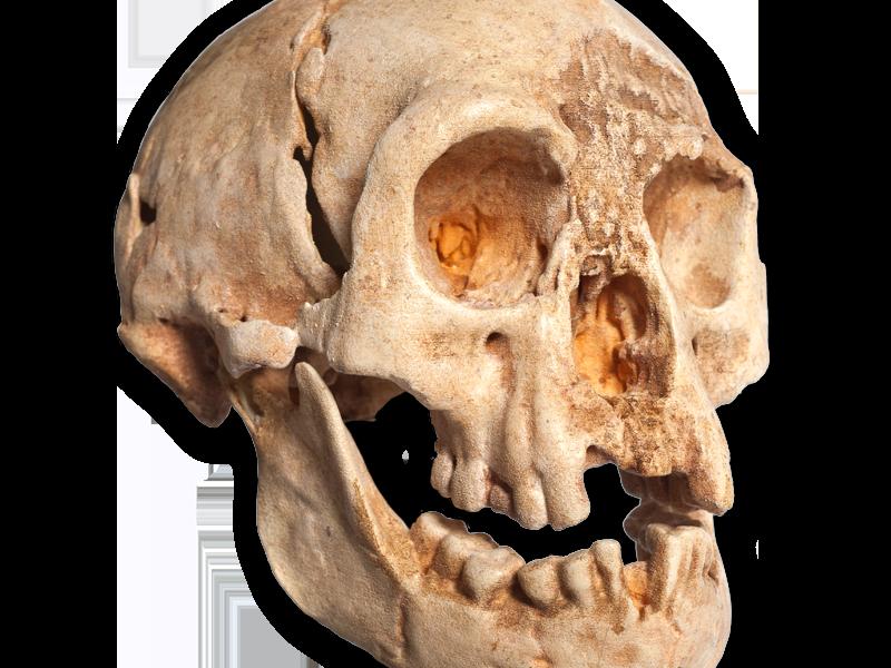 Skull of Homo floresiensis