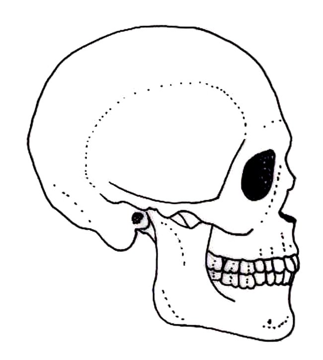human evolution website drawings