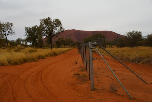 Fenced enclosure for mala (Lagorchestes hirsutus) at Uluru
