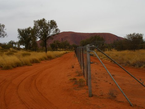 Fenced enclosure for mala (Lagorchestes hirsutus) at Uluru