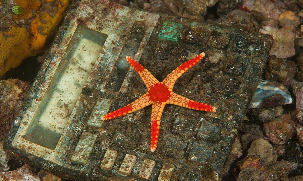 Starfish (Fromia monilis) stuck on a plastic calculator trashed near Banda Neira, Indonesia