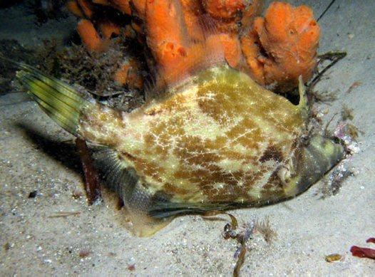 Fanbelly Leatherjacket