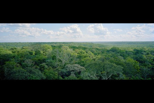Amazonian forest