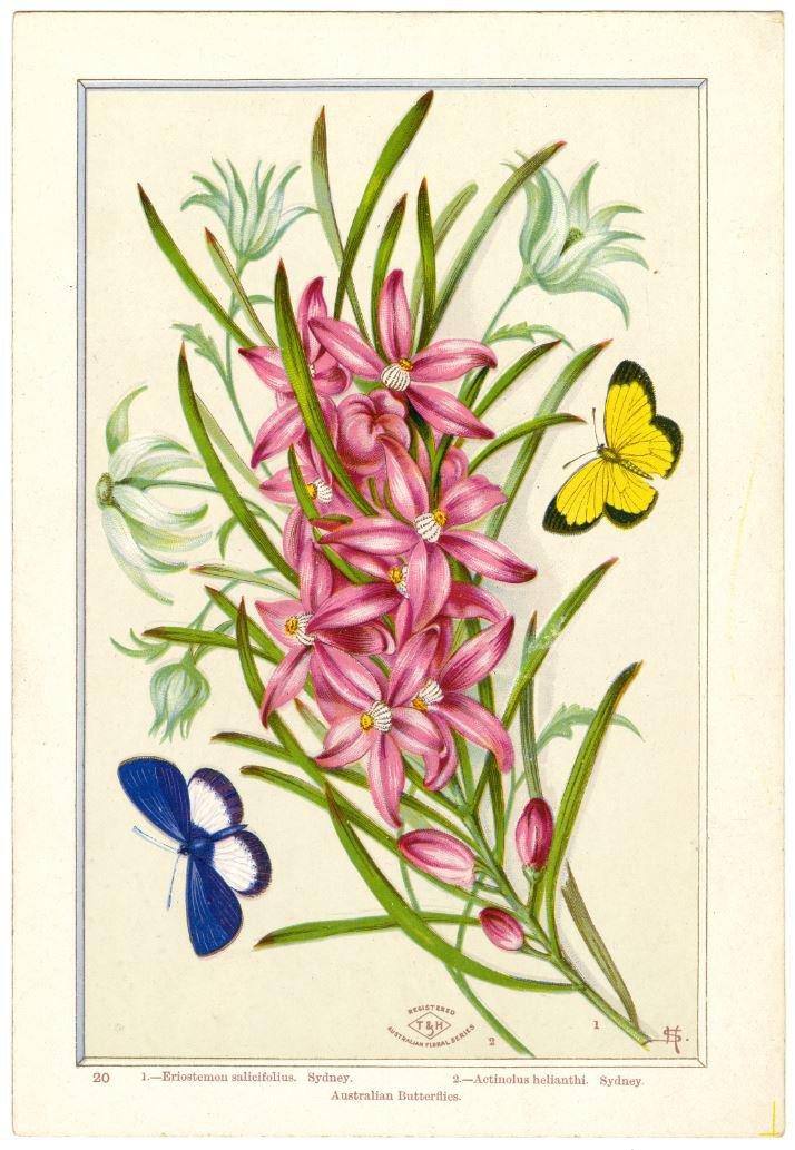 Card designed by Harriet Scott 1