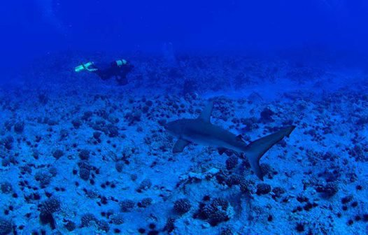 Mark and shark