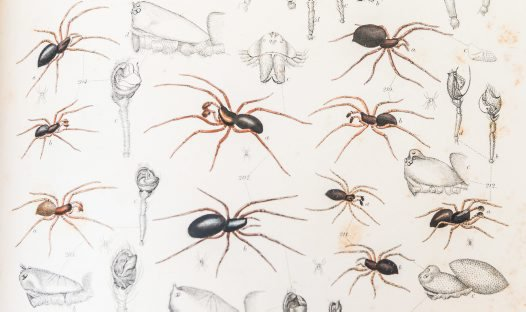 Surprising spiders from our Rare Books collection.