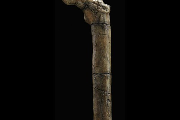 Partial femur (BAR1002) of Orrorin tugenensis