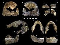 Homo naledi type specimen
