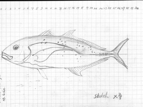 Sketch from Whitley's official diary